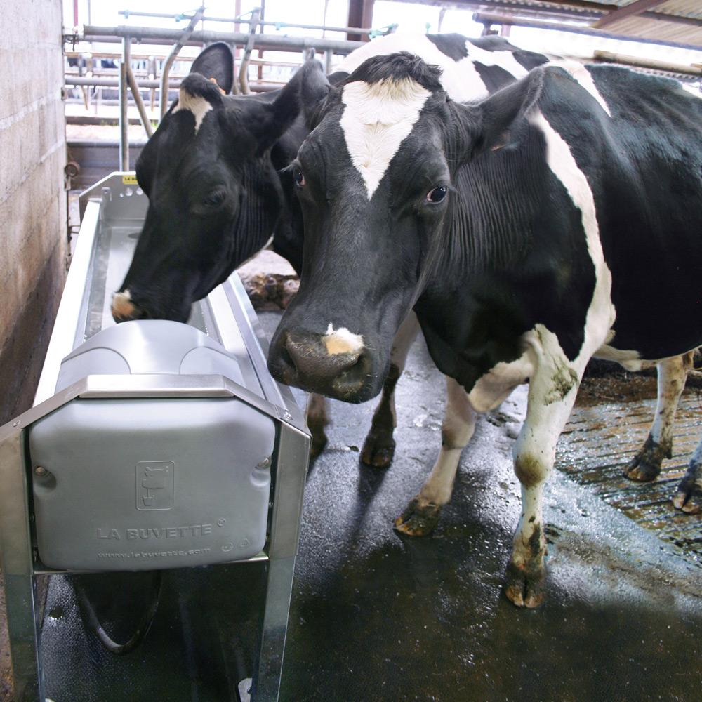 ABLAUFTRÄNKEN GV150 für Milchkühe